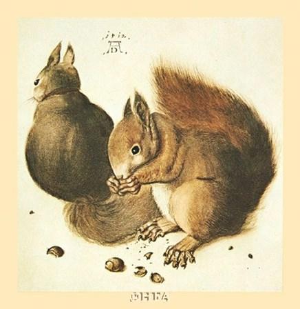 Squirrels by Albrecht Durer art print