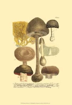 Mushrooms II by Johann Wilhelm Weinmann art print