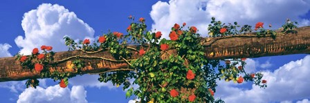 Arbor and Spreading Rose, California by Panoramic Images art print